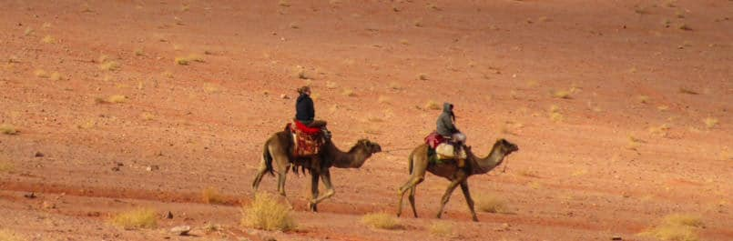 Camel riding in Wadi Rum desert