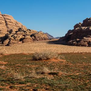 Green valleys at springtime in Wadi Rum
