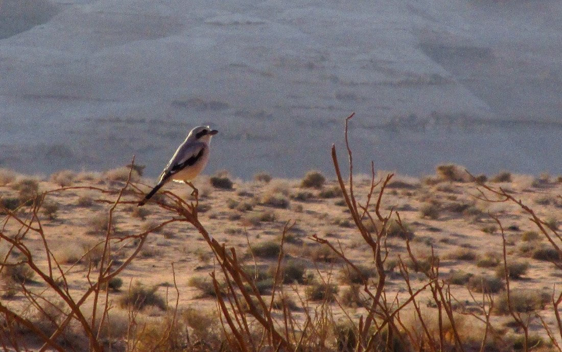 bird watching in wadi rum desert
