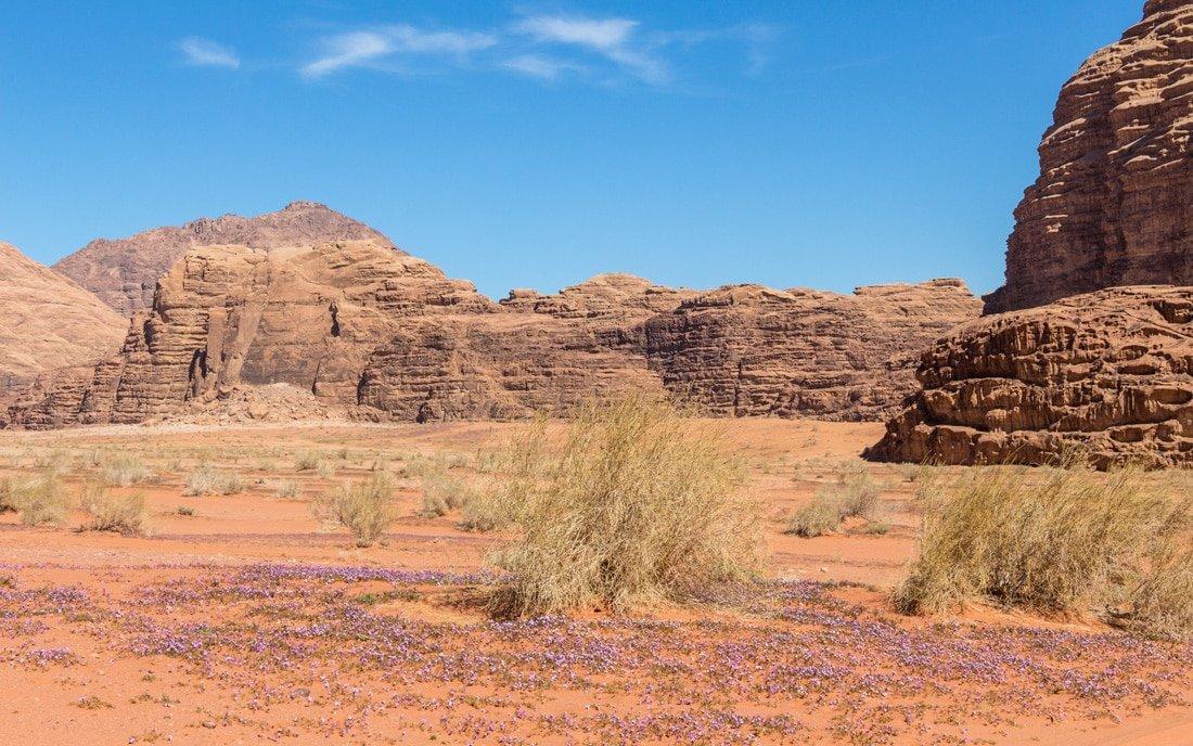 springtime in wadi rum desert