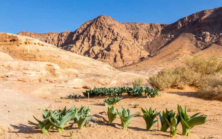 plants growing during autumn in wadi rum desert