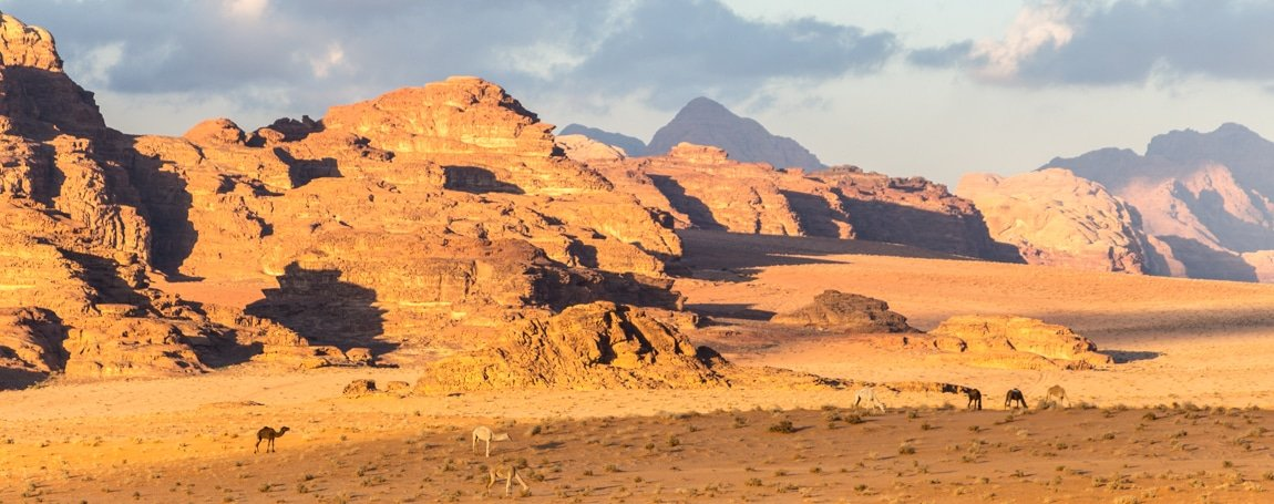 view on camels grazing in wadi rum - so geology, flora and fauna in one picture